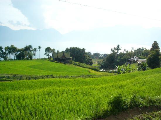 rice_field_04